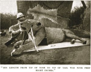 Patterson and his first kill, a lion measuring 9 feet, 8 inches from the tip of his nose to the tip of his tail.
